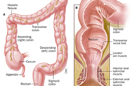 Colon And Rectal Srugery